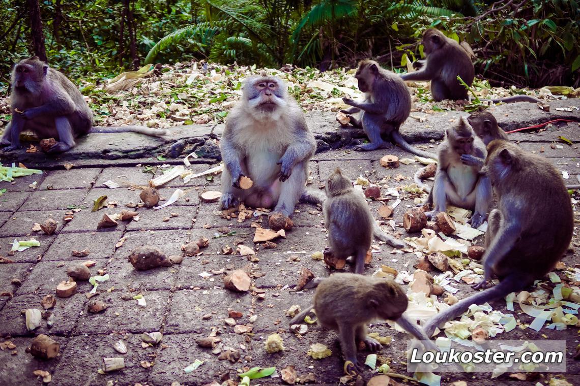 Экскурсия в Лес обезьян
