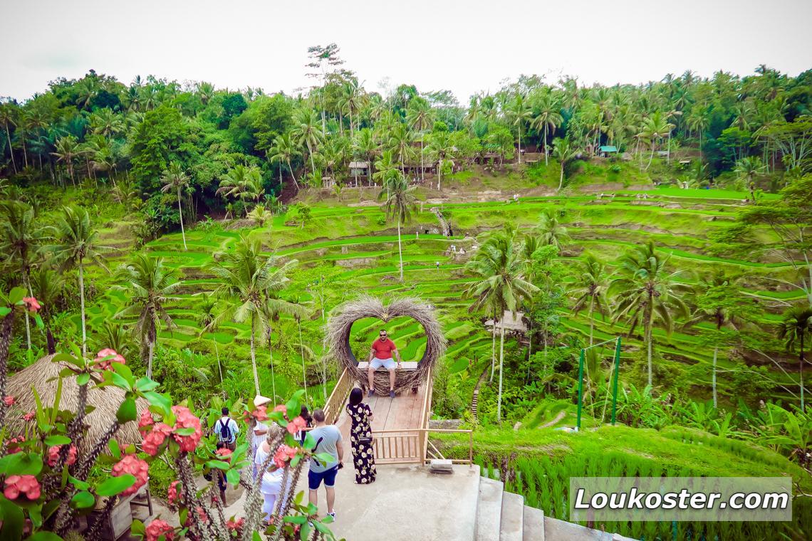 Экскурсия на рисовые террасы Тегаллаланг
