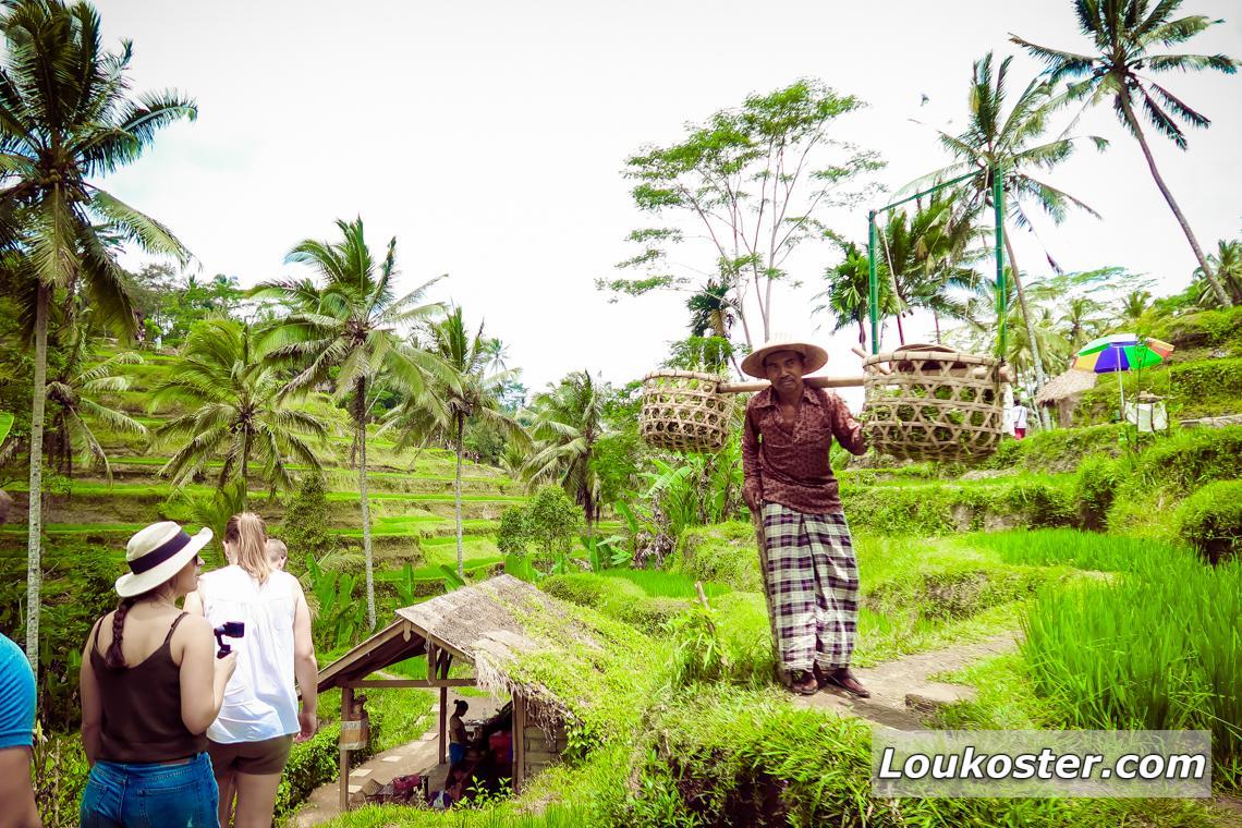 Экскурсия на рисовые террасы Джатилувих