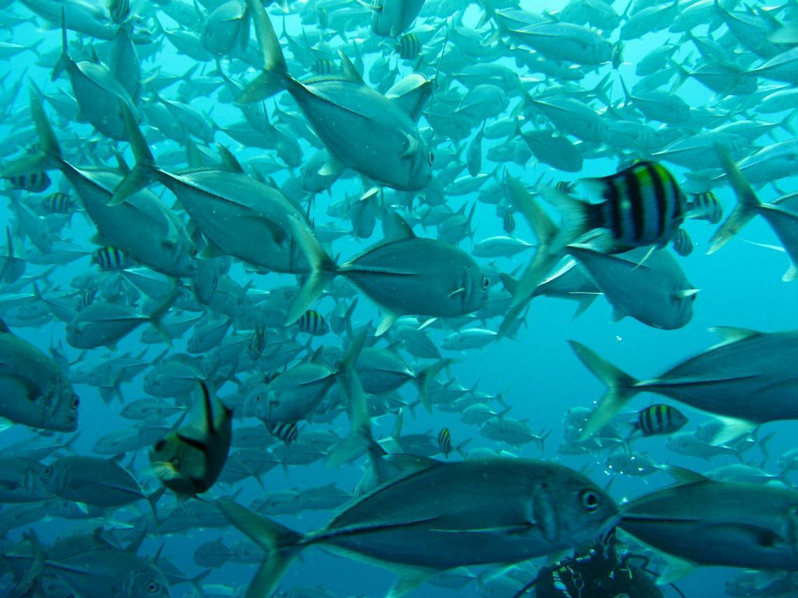 Экскурсия Морская рыбалка на Бали